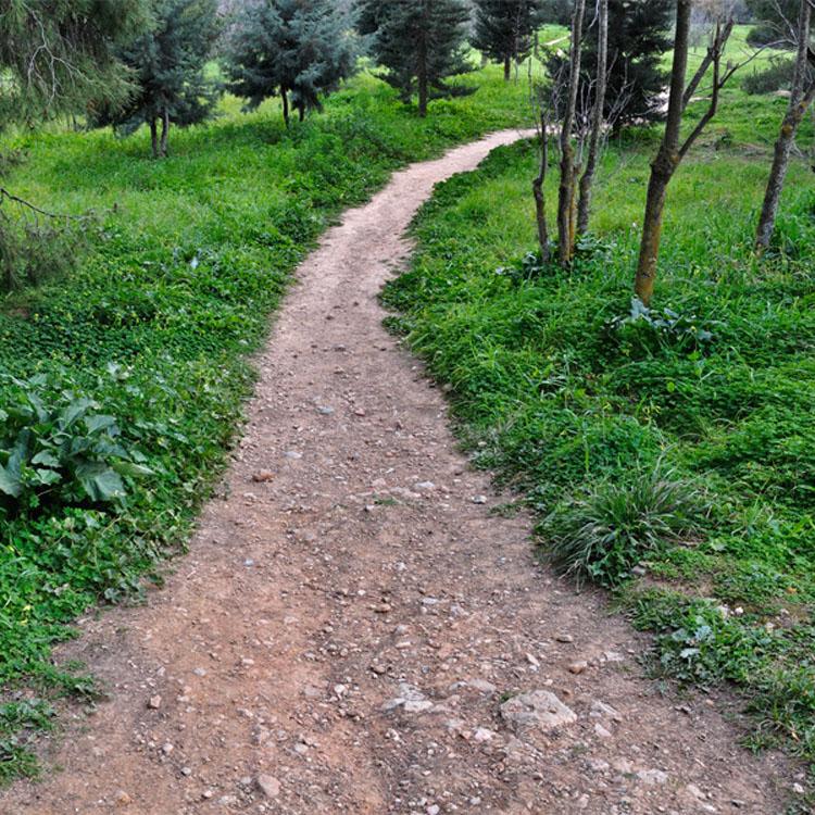 El camino que escojas revelará tu futuro y personalidad 3