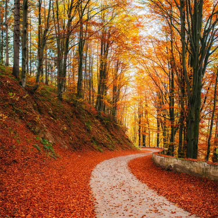 El camino que escojas revelará tu futuro y personalidad 5