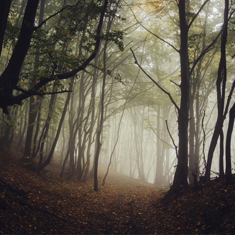 El camino que escojas revelará tu futuro y personalidad 6