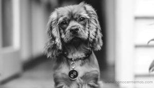 Las 7 principales razas de perros para personas que luchan contra la depresión