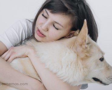 Cuando estás de duelo por la pérdida de tu amada mascota... 1