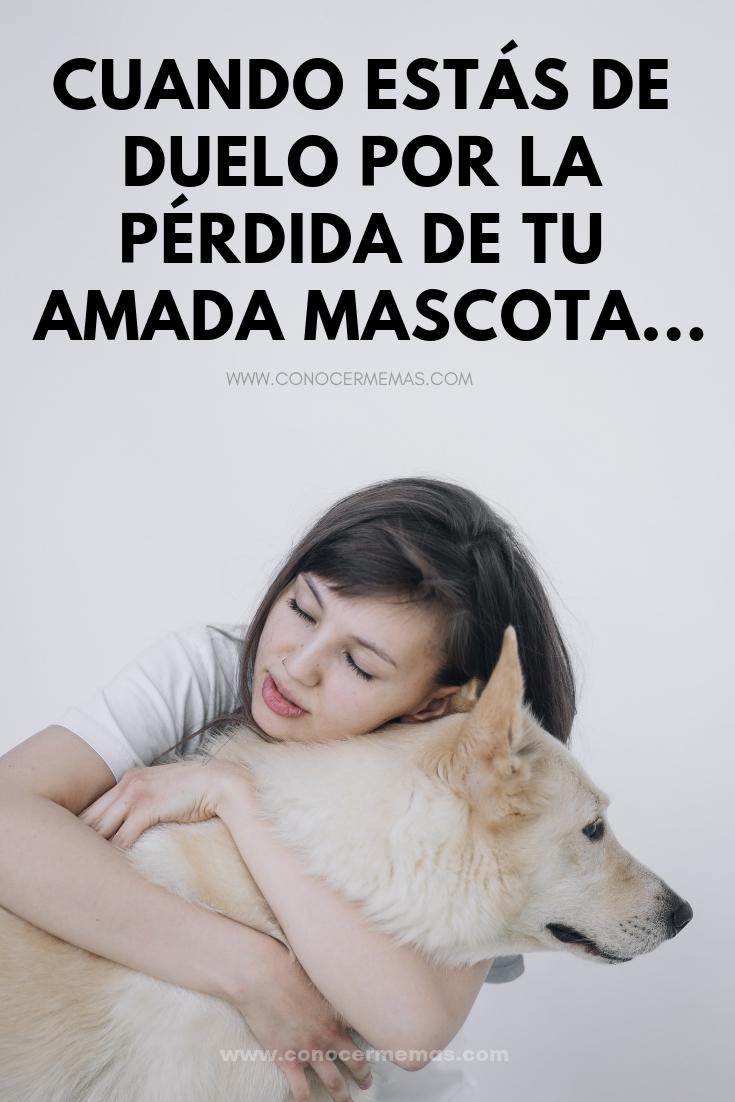 Cuando estás de duelo por la pérdida de tu amada mascota...